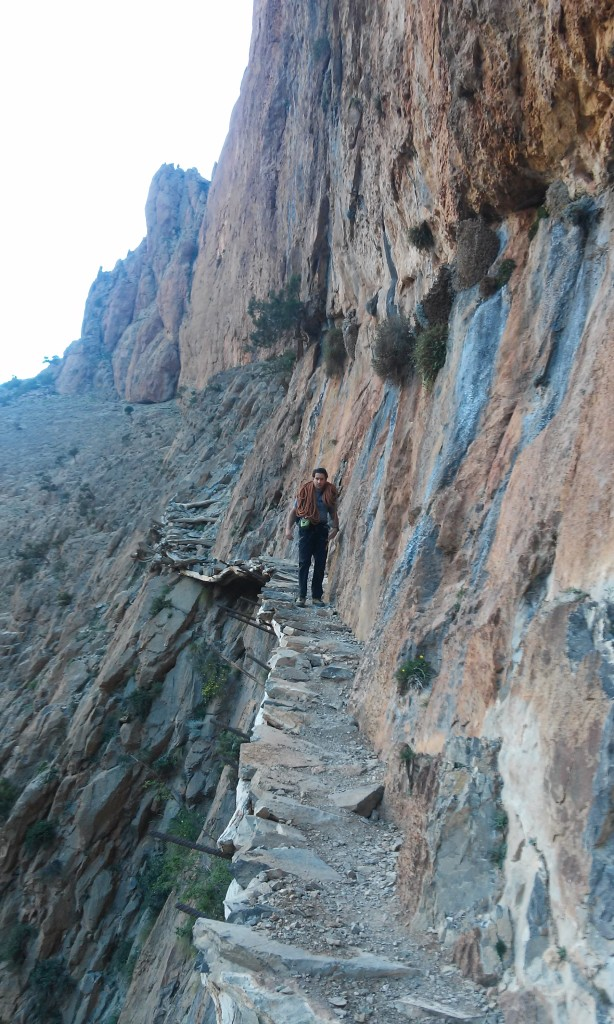 Berberpaadjes langs de wand